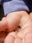 A tiny menagerie of baby Hermit Crabs and Snails in Molly's hand.